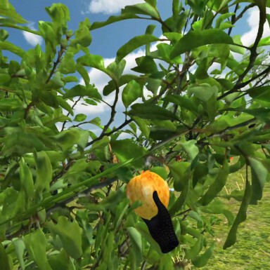 Fruit Picker VR Game for Oculus Quest